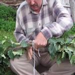 Как вязать берёзовые веники для бани