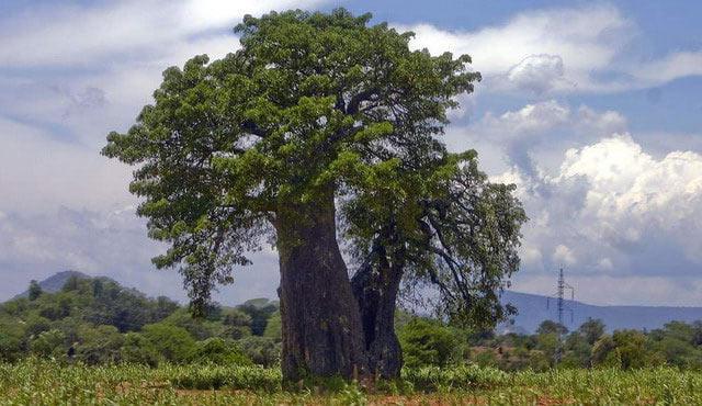 Каким деревом обшивают парилку в бане